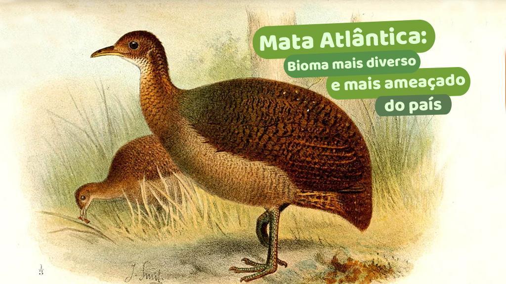 Mata Atlântica: bioma mais diverso e mais ameaçado do país