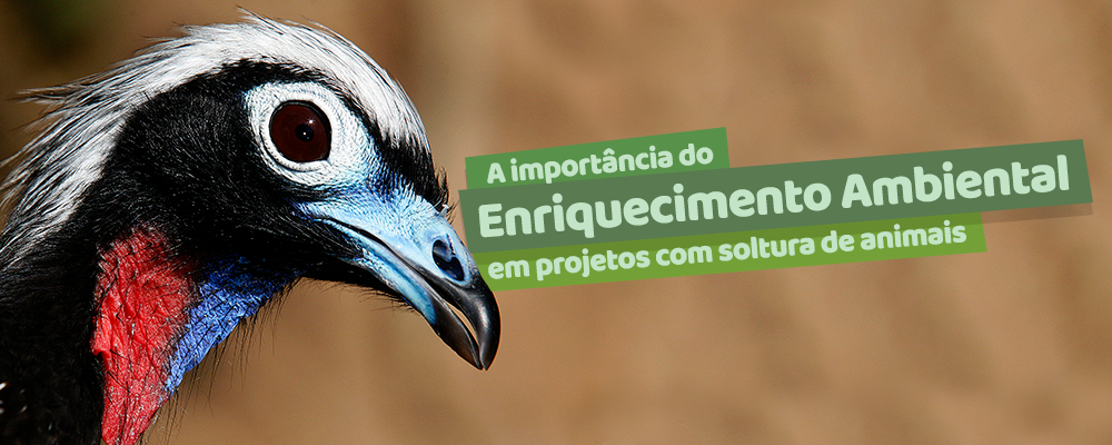 A importância do Enriquecimento Ambiental em projetos com soltura de animais