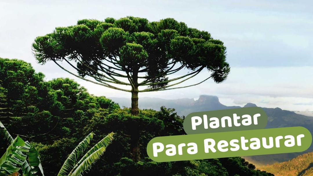 Plantar Para Restaurar