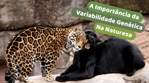 A importância da variabilidade genética na natureza