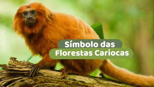 Símbolo das florestas cariocas