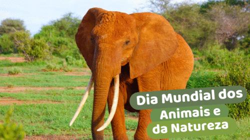 Dia Mundial do Animais e da Natureza