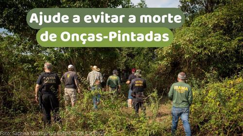 Ajude a evitar a morte de onças-pintadas no Pantanal