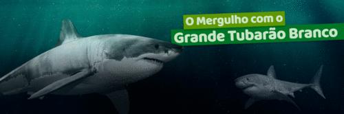 O mergulho com o grande tubarão-branco