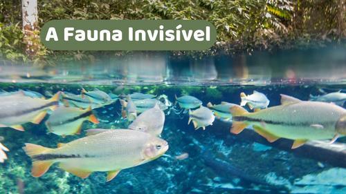 A Fauna Invisível