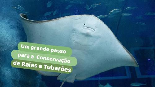 Um grande passo para a conservação de raias e tubarões