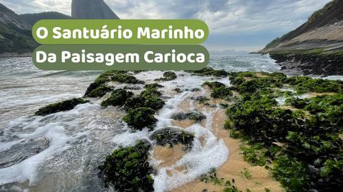 O Santuário Marinho da Paisagem Carioca