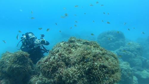 Branqueamento de corais e o trabalho do Projeto Conservação Recifal