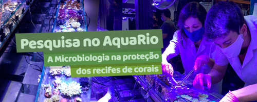 Pesquisa no AquaRio: A Microbiologia na proteção dos recifes de coral