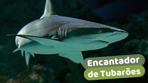 Encantador de Tubarões